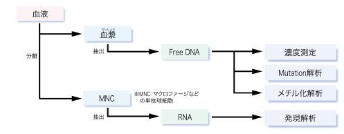 遺伝子解析について